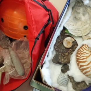 Laboratorio sui fossili